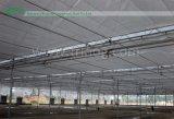 serre chaude agricole de film de Multi-envergure pour la tomate hydroponique