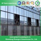 Serre chaude en verre de Venlo de Multi-Envergure pour la plantation