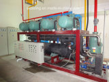Tamanho grande armazém de frio integrado personalizado para produtos hortícolas Frutas fábrica de transformação de Refrigeração