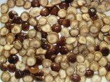 Champignon de couche de Shiitake en boîte par champignon de couche 2840g