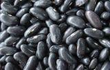 Новая большая черная фасоль почки