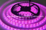 Luz de tira de 5050 SMD LED