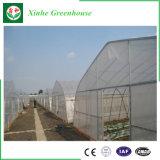 Дом тропической пленки клубники зеленая