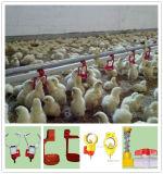 Huhn-Bauernhof-führende Auflage und trinkender Nippel