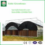 Chambre végétale verte
