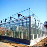 Коммерчески стеклянный парник для овоща и цветка