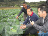 Fertilizzante organico microbico di Unigrow sulla piantatura degli ortaggi da frutto e del melone