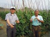 Unigrow Biodüngemittel auf irgendeinem Gemüsepflanzen