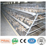 Het Systeem van de Kooien van de Kip van de Apparatuur en van de Jonge kip van het Landbouwbedrijf van het gevogelte