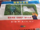 Sacchi di carta del sacco di carta della farina/sacco di carta del riso/imballaggio di pane