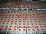 شوكولاطة آلة شوكولاطة [سنتر-فيلّينغ] دبابة [200ل] ([كّت200])