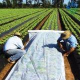 tela não tecida com o anti 3% UV para a tampa da planta da agricultura, tela da agricultura de 40-50GSM 100% PP Spunbond do Nonwoven do controle de Weed