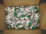 sacchetto della maglia 20kg che imballa aglio bianco puro