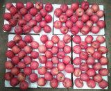 FUJI Apple краснеет красный цвет