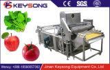 Máquina de lavar vegetal da bolha de SUS304leaf do fabricante de Shandong