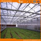 Planting Vegetables를 위한 좋은 Look Venlo Type 다중 Span Glass Greenhouse
