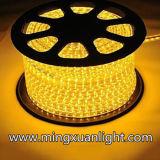 24 mesi di colore 5050-5m-300SMD facoltativo della garanzia impermeabilizzano la striscia del LED