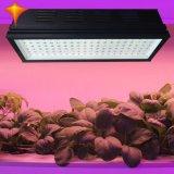 o diodo emissor de luz das colheitas das flores dos vegetais da estufa 300W cresce a luz