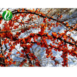100%년 성격 바다 털갈매나무 과일 추출 분말