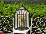 La polvere ha ricoperto lo specchio del giardino incorniciato metallo di figura della gabbia di uccello