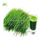 Polvere verde organica solubile in acqua dell'erba del frumento/orzo di 100%