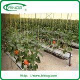 Rockwool Substratfläche hdyroponics System für das Pfefferwachsen