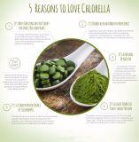 Clorella organica all'ingrosso naturale del campione libero