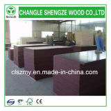 Filme Changle Shandong enfrentou o contraplacado madeira contraplacada de construção de contraplacado Marinho