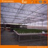 Agricultural Planting를 위한 PC Sheet 다중 Span Venlo Type Greenhouse