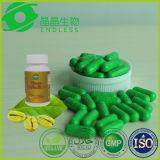 Commercio all'ingrosso della capsula diplomato GMP del chicco di caffè di verde di perdita di peso