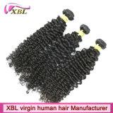 Волосы девственницы оптовой продажи большого части фабрики Xbl бразильские Kinky курчавые