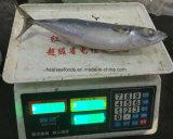 Chinese Bevroren Vreedzame Makreel (150-250g)