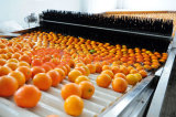 Lavado de frutas y alimentos de depilación con cera / / / Clasificación La clasificación /La máquina de mecanizado