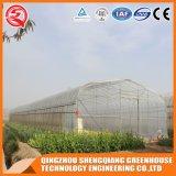 Boa qualidade de filme plástico Single-Span emissões para os produtos agrícolas