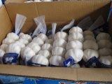 최신 판매 신선한 작물 우수한 4p 메시 부대 백색 Garlics