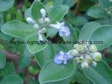 Vitexの葉のエキス0.3%、食糧補足のためのVitex Agnus-Castus