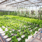 농업 PVC 필름 녹색 집