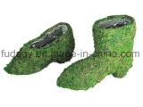 Potenciômetro colocado saltos do jardim de flor do musgo da sapata