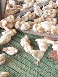 닭 Breeding를 위한 Unigrow 공급 첨가물