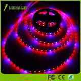 12V 60 kweekt LEDs/de Meter 5m/Roll LEIDENE leiden van de Kleur van de Strook Lichtrode en Blauwe Lichte Strook