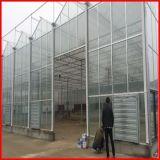 판매를 위한 중국 공급자 Venlo 농업 유리제 온실