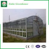 De Serre van het Glas van Venlo van de multi-Spanwijdte van de landbouw voor Hydroponic Groeiend Systeem