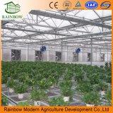 Wasserdichter Polycarbonat-Garten-Gewächshaus-Sonnenschutz mit grünem Aluminiumhaus