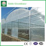 Serra di plastica di agricoltura per gli ortaggi/fiori