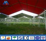 Populäres wahlweise freigestelltes Farben-Wand-Bankett-Partei-Zelt für Verkauf