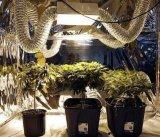 1000W 2000k E39 HPSの園芸のプラントはライトを育てる
