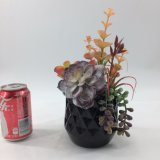 훈장 Bonsai가 인공적인 Succulent에 의하여 꽃이 핀다