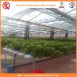 정원 또는 갱도 야채 또는 꽃 성장하고 있는을%s 유리제 녹색 집 경작하기