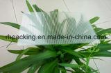 Le plastique ondulé transparent de pp couvre le panneau Corflute Correx Coroplast de pp pour l'Américain et le marché 1220*2440mm 910*1820mm du Japon