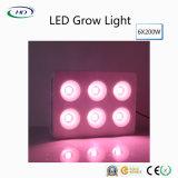 Hochwertige 6*200W LED wachsen für Handelsbearbeitung hell
